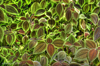 Textured-leaves