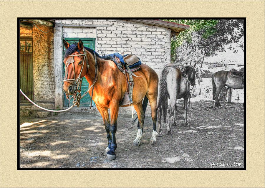 Horses8transframed