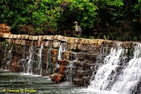 Heron-on-mill-dam