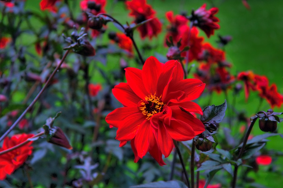 Just a red flower