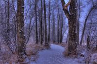 Encchanted-forest