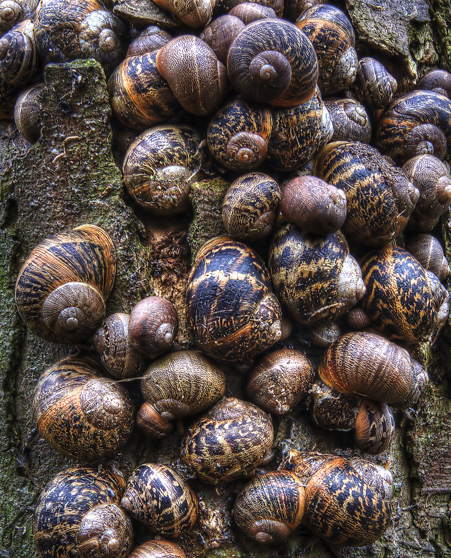 Snails up a tree