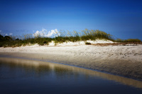 Hilton-head-island-sea-oats