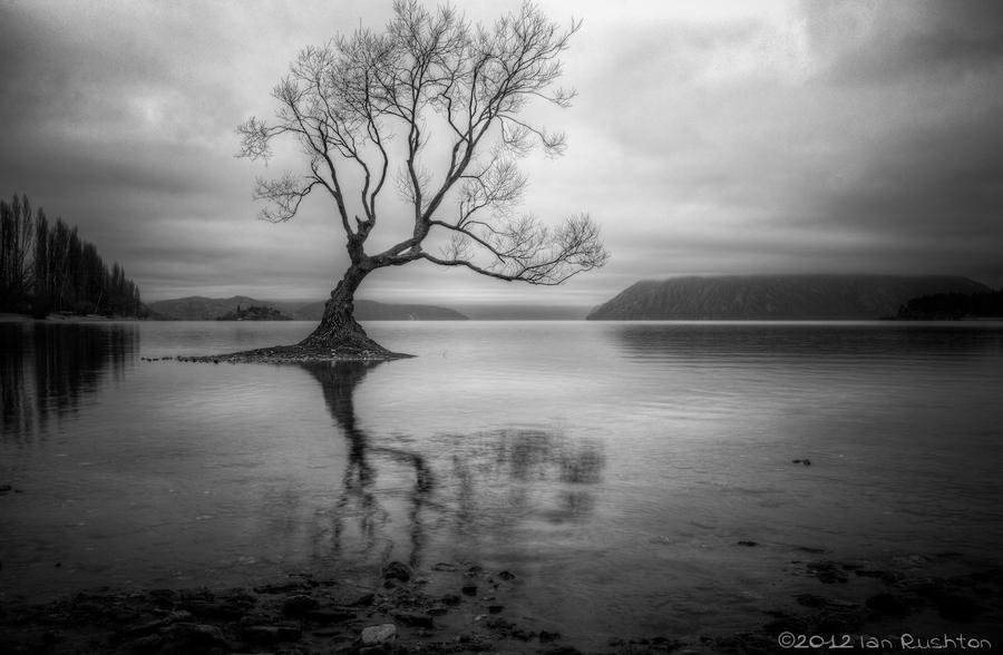 Lonely Black And White Lake Wanaka, New Zeala...