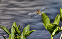 Dragonfly-from-finland