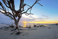 Sunrise-at-driftwood-beach