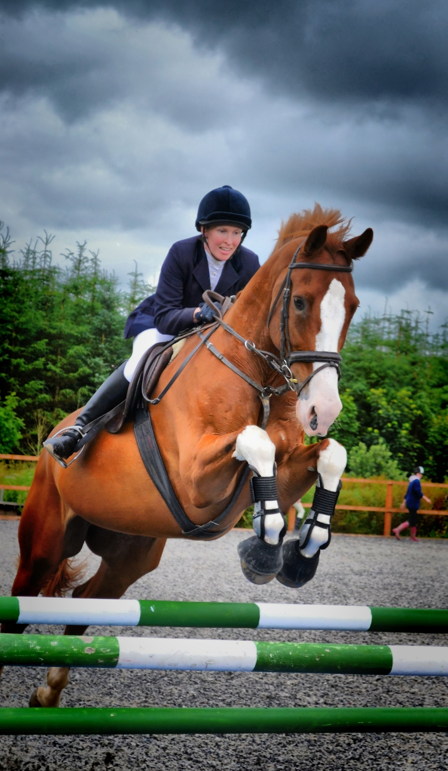Show Jumping Horses Show Jumping Horse