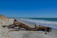 Driftwood-fernandina-beach-amelia-island-