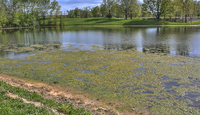 Lake-with-algae-