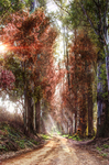 Dream-forest-path-