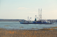 Shrimp-boat-hilton-head-island