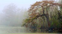 Foggy-swamp