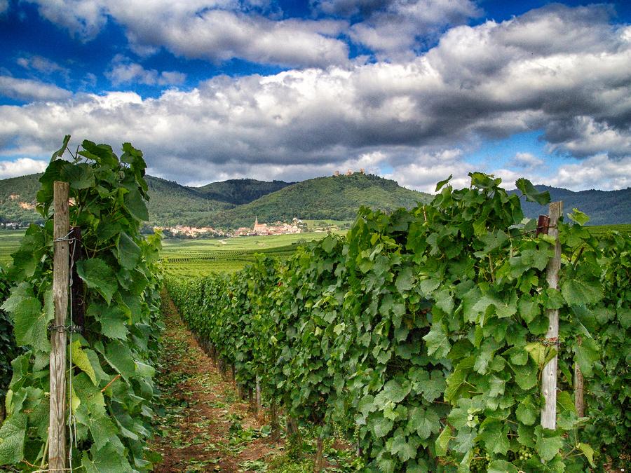 Alsac vineyards hdr