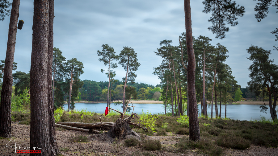 Frensham little pond jpg