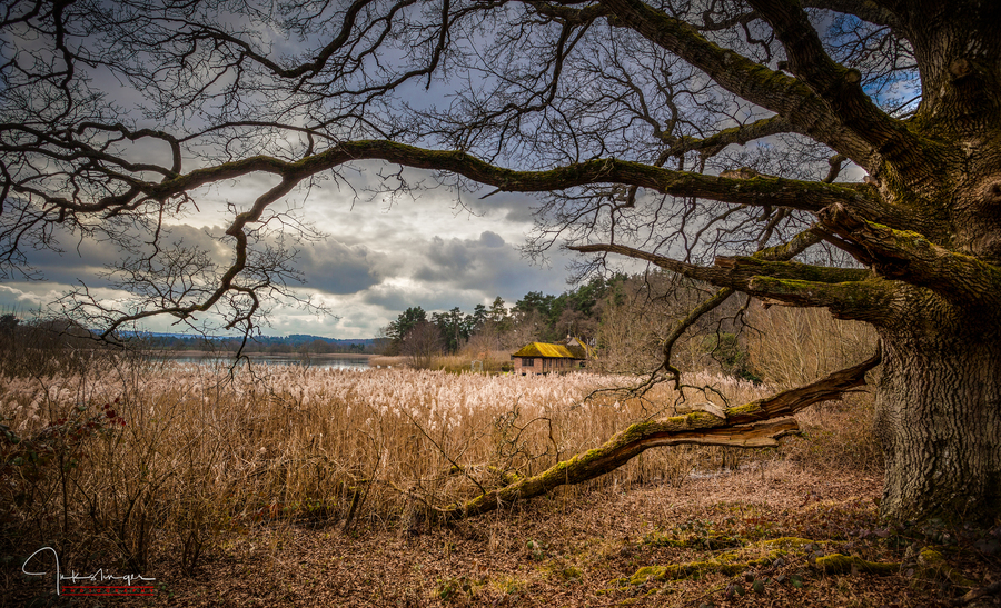 Frensham little pond 1