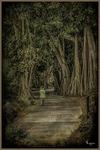 Walking Through the path